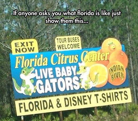 "Florida In A Nutshell. Florida In A Nutshell . J!"" anyone asks ""you whit florida is like iust m shot/ hem thir.."
